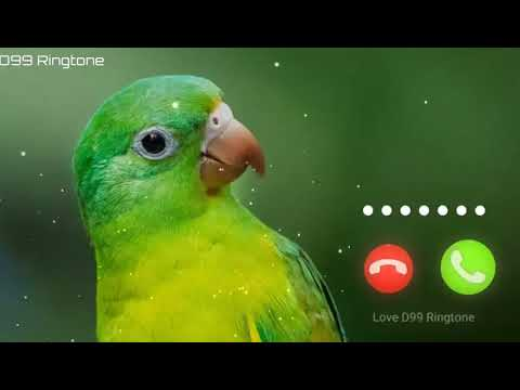 Cute sms Ringtone Download